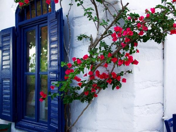 Ngất ngây trước những ngôi nhà có giàn hoa giấy đẹp mỹ mãn